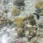 Acqua trasparente con coralli