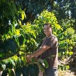 Working Kona Coffee Estate