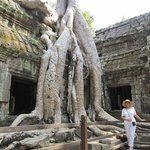 Trees growing all over the temples!