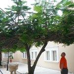 Very intwined tree