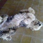Tommy o cachorro da posada cavieres
