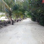 path to the cabins. Beach on the left, cabins on the right