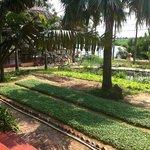 The front herb garden