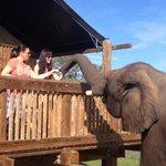 feeding Malika the Elephant