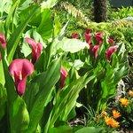 Lush garden planting