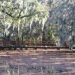 Magnolia Garden