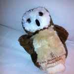 They lavished the kids with gifts and treats upon arrival. Including an plush owl for each one.