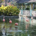 The grounds and Flamingos near lobby