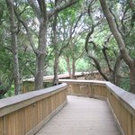 Beautiful wooden walkway to the beach