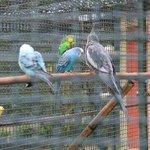 Вольер с попугаями
