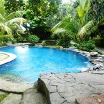 Amazing pool and garden