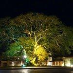Magnifique arbre dans la cour d'entrée