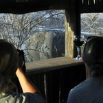 Game viewing from blinds on location