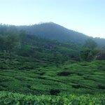 nearby tea garden