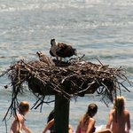 Guests in their own dingy checking out an Osprey nest on the Creek!