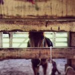 my horse at the stall
