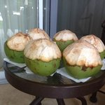 Coconuts made our week! Thank you!!!