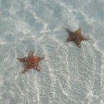 des étoiles de mer à la plage Sirena