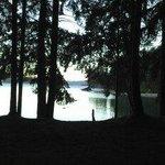 Los bosques y el lago-UNICO !!