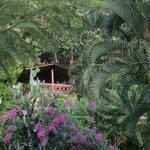 Wunderschön gebaute Bungalows in einer grünen Oase