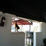 Monkeys outside our room