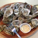 Nice salty oysters in March