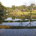 Le parc avec ses rizières.