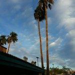 Palm trees outside