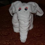One of our towel animals