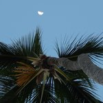 Lune et palmier