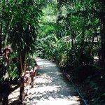 Weg zum Bungalow
