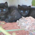 Two beautiful kittens kept us company