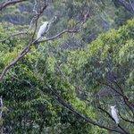 Birds in a tree at Cedar Lake