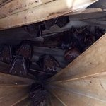 bats sheltering in the palm tree in the poolside garden