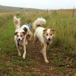 Paddington and Whiskey: Off lead fun on the 5km walk