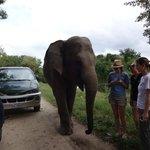 The Gorgeous Elephant