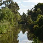 River Torrens Linear Park Trail  (3)