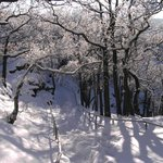 Winter an der Rosstrappe 3