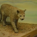 South Australian Museum (2)