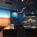 South Australian Museum (3)