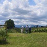 Walking Between Vineyards