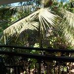 Пальма перед балконом