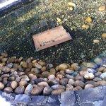 Müll im Teich des Spa-Außenbereichs