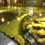 бассейн с огромной черепахой