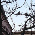 Fåglar som kvittrar