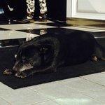 Peanut, the charming hotel dog
