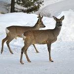 Wildbeobachtungen im Winter