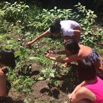 choosing herbs in Ying's back garden