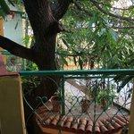 Der Mangobaum, die Mitte des Hauses