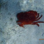 Crab on sandy bottom